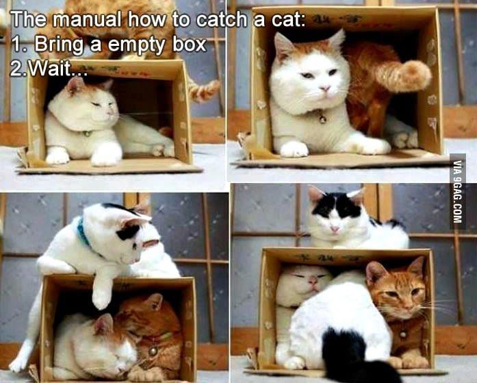 Morsomme katter som presser seg inn i pappesker
