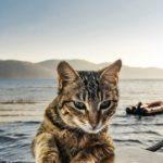 Kattensverden.no er lansert
