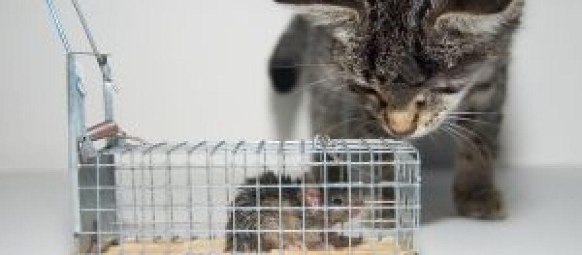 Illustrasjon på katt som instinktivt vil jakte på mus
