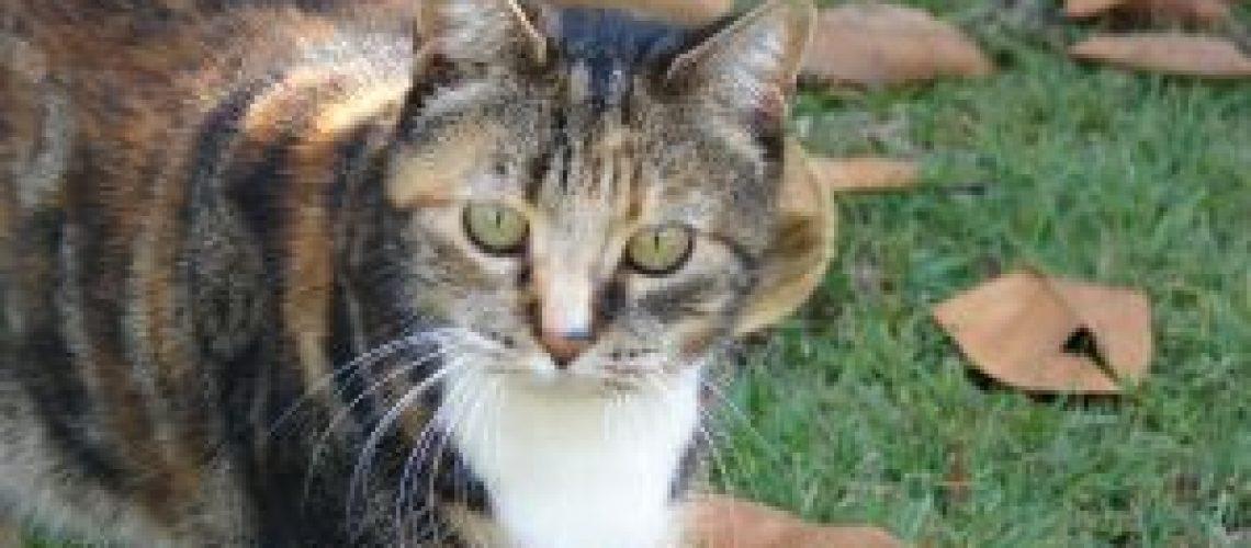 593534_moggie_cat
