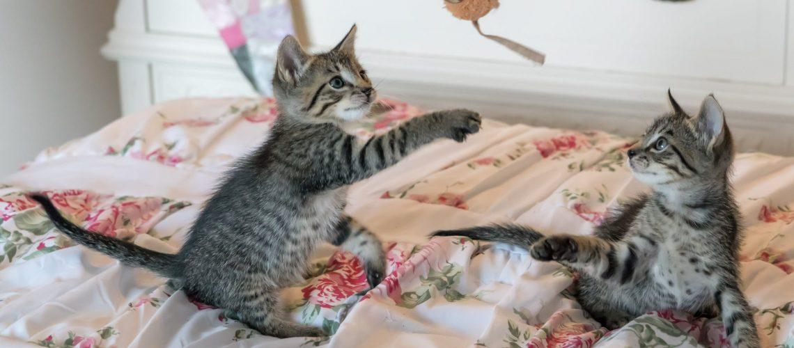 2 Lekne katter